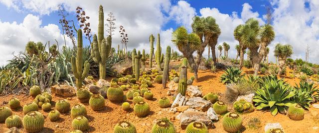 Botanical Garden「Cactus Country」:スマホ壁紙(11)