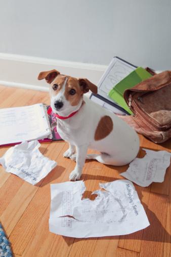 Forgiveness「The dog ate my homework」:スマホ壁紙(12)