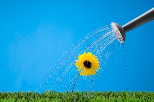 Planting「Watering A Flower」:スマホ壁紙(7)