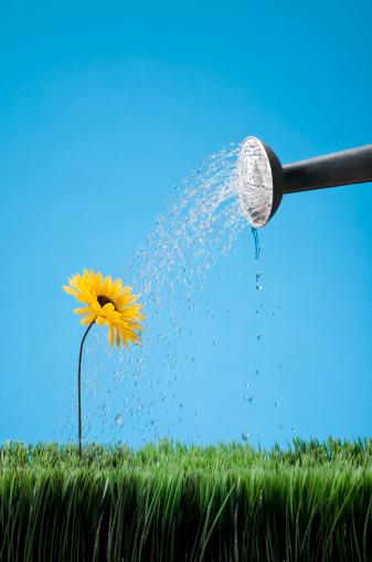 Gardening「Watering A Flower」:スマホ壁紙(5)