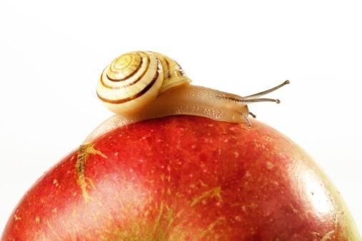 カタツムリ「Snail on apple, close-up」:スマホ壁紙(19)