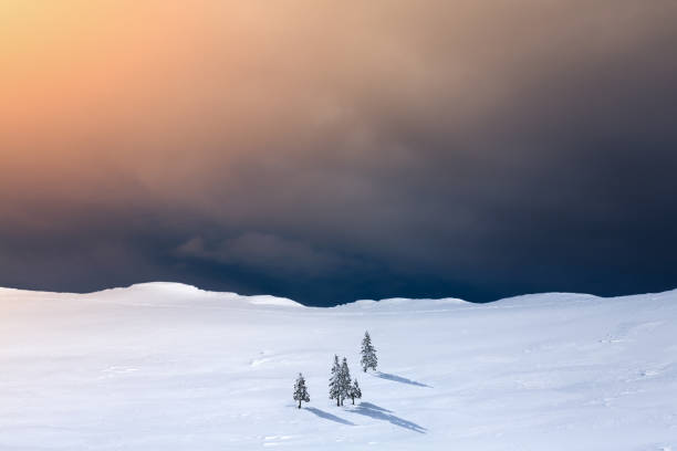 Winter Landscape With Pine Trees:スマホ壁紙(壁紙.com)