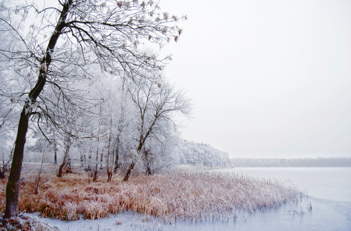 Frost「Winter landscape on a river with birch tree」:スマホ壁紙(18)