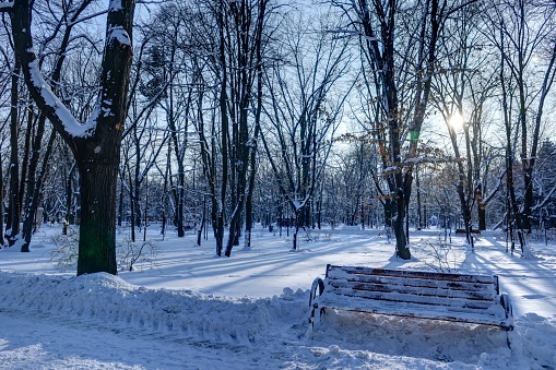 2017「Winter Landscape In The Park」:スマホ壁紙(12)