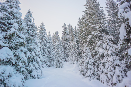 グルノーブル「Winter landscape」:スマホ壁紙(9)