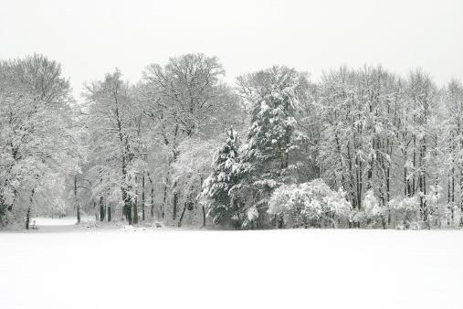 Midday「Winter landscape」:スマホ壁紙(6)