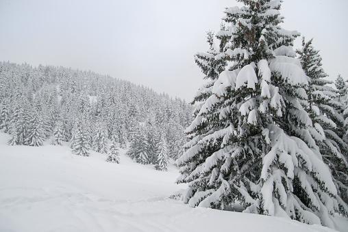 グルノーブル「Winter landscape」:スマホ壁紙(8)