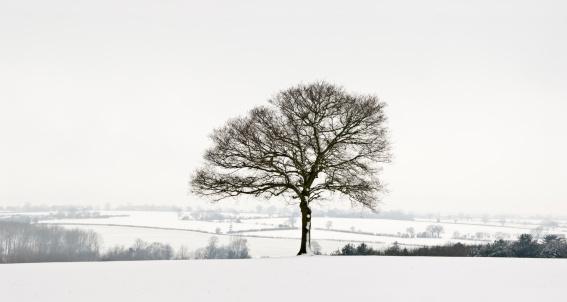 Snowdrift「Winter landscape」:スマホ壁紙(8)
