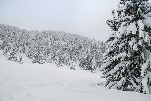 グルノーブル「Winter Landscape」:スマホ壁紙(3)