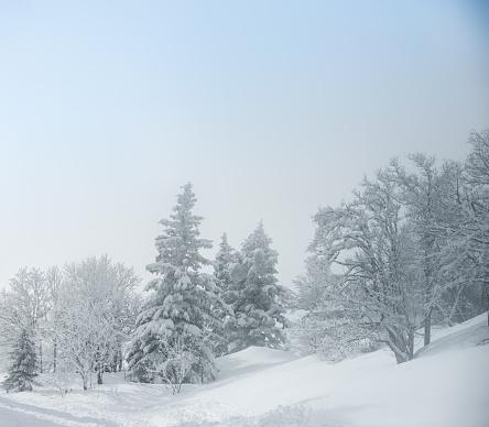 グルノーブル「Winter landscape」:スマホ壁紙(15)