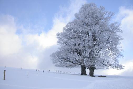 スノーボード「冬の風景」:スマホ壁紙(13)