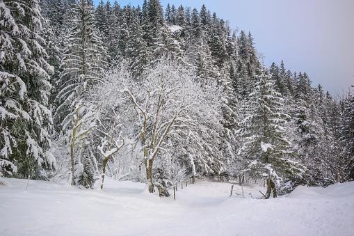 グルノーブル「Winter landscape」:スマホ壁紙(4)