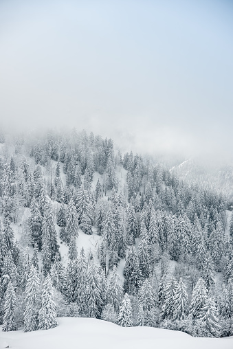 グルノーブル「Winter landscape」:スマホ壁紙(13)