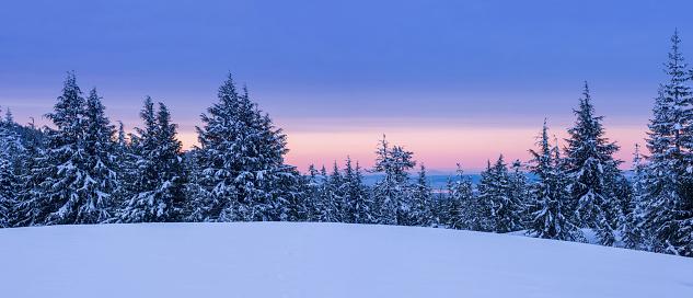 Coniferous Tree「Winter Landscape」:スマホ壁紙(18)