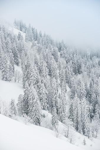 グルノーブル「Winter landscape」:スマホ壁紙(5)