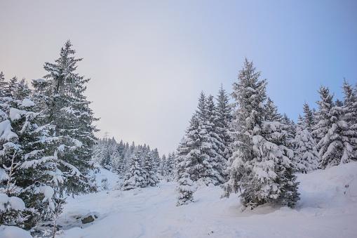 グルノーブル「Winter landscape」:スマホ壁紙(16)