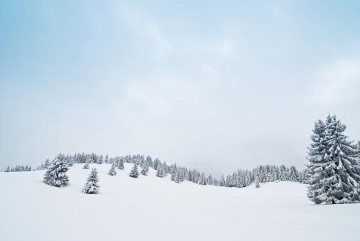 北極「冬の風景、雪と Coniferous の木」:スマホ壁紙(12)