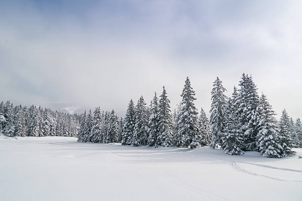 Winter Landscape with Snow and Trees:スマホ壁紙(壁紙.com)