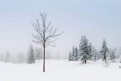 グルノーブル「冬の風景、雪と木々」:スマホ壁紙(7)
