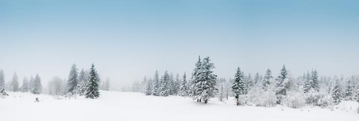 グルノーブル「冬の風景、雪と木々」:スマホ壁紙(19)
