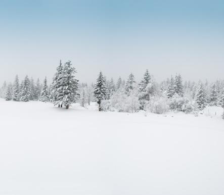 グルノーブル「冬の風景、雪と木々」:スマホ壁紙(18)