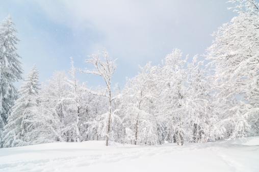雪が降る「冬の風景、雪と木々」:スマホ壁紙(16)