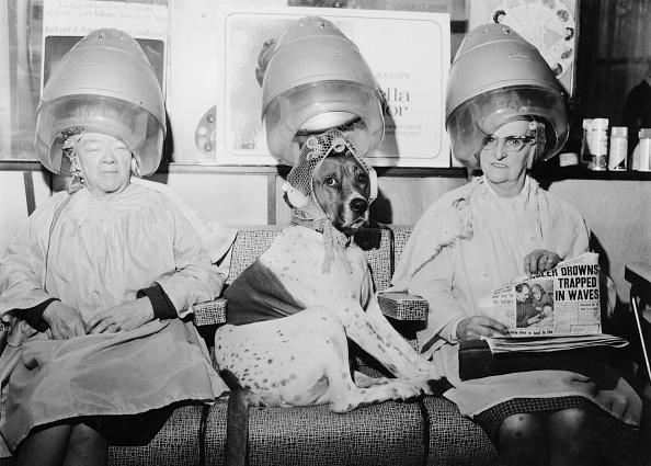 アーカイブ画像「Hair Of The Dog」:写真・画像(16)[壁紙.com]