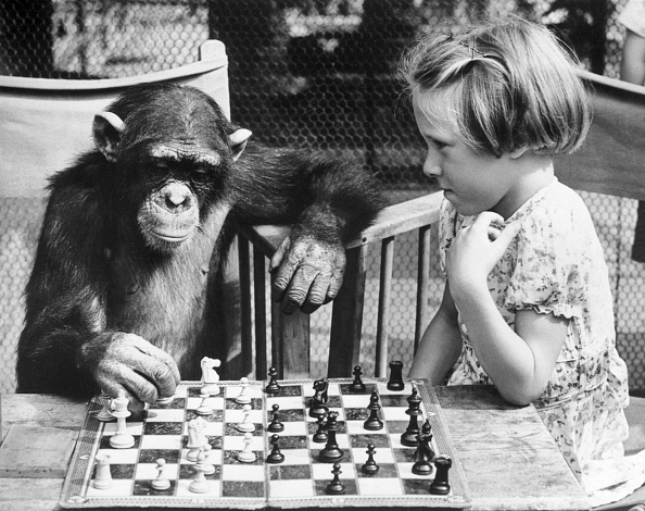 Playing「Chess Chimp」:写真・画像(3)[壁紙.com]