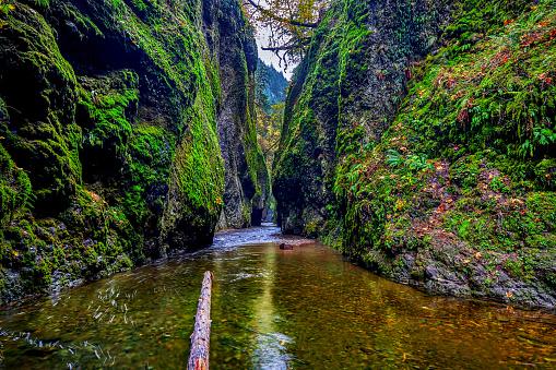Oneonta Gorge「Historic Columbia River Highway,Oregon,USA」:スマホ壁紙(10)