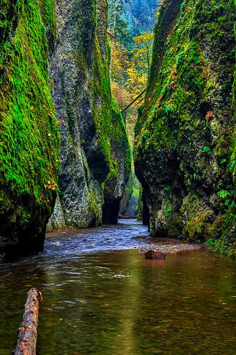 Oneonta Gorge「Historic Columbia River Highway,Oregon,USA」:スマホ壁紙(7)