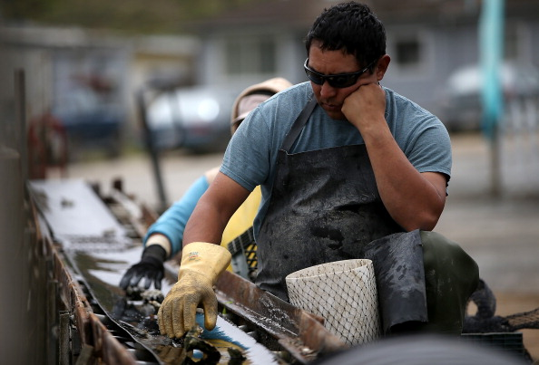 Wilderness Area「Oyster Farmers Begin To Wind Down Operations After Feds End Nat'l Seashore Lease」:写真・画像(13)[壁紙.com]