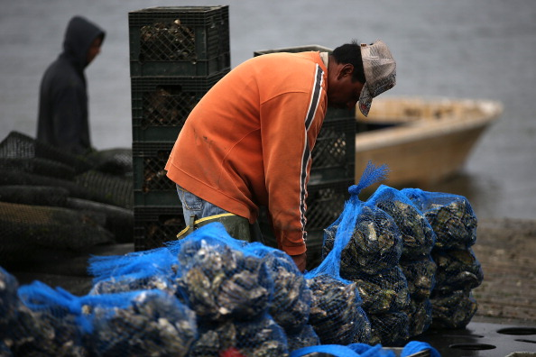 Wilderness Area「Oyster Farmers Begin To Wind Down Operations After Feds End Nat'l Seashore Lease」:写真・画像(8)[壁紙.com]