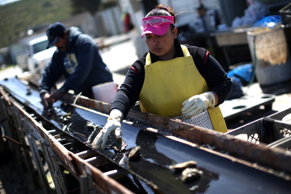 Wilderness Area「Bay Area Oyster Farm Takes Appeals Of Federal Waters Use Case To Supreme Court」:写真・画像(10)[壁紙.com]