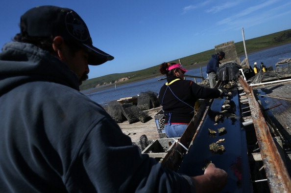 Wilderness Area「Bay Area Oyster Farm Takes Appeals Of Federal Waters Use Case To Supreme Court」:写真・画像(5)[壁紙.com]