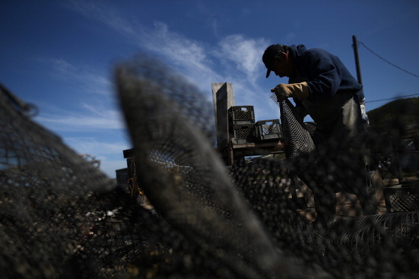 Wilderness Area「Bay Area Oyster Farm Takes Appeals Of Federal Waters Use Case To Supreme Court」:写真・画像(6)[壁紙.com]