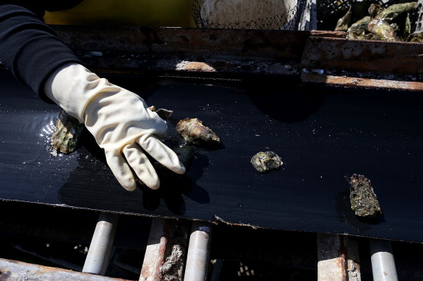 Wilderness Area「Bay Area Oyster Farm Takes Appeals Of Federal Waters Use Case To Supreme Court」:写真・画像(12)[壁紙.com]