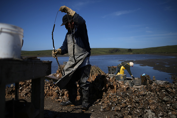 Wilderness Area「Bay Area Oyster Farm Takes Appeals Of Federal Waters Use Case To Supreme Court」:写真・画像(11)[壁紙.com]