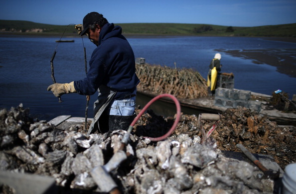 Wilderness Area「Bay Area Oyster Farm Takes Appeals Of Federal Waters Use Case To Supreme Court」:写真・画像(1)[壁紙.com]