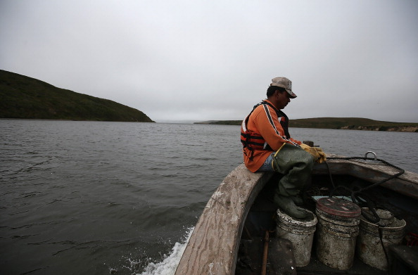 Wilderness Area「Oyster Farmers Begin To Wind Down Operations After Feds End Nat'l Seashore Lease」:写真・画像(3)[壁紙.com]