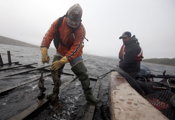 Wilderness Area「Oyster Farmers Begin To Wind Down Operations After Feds End Nat'l Seashore Lease」:写真・画像(18)[壁紙.com]