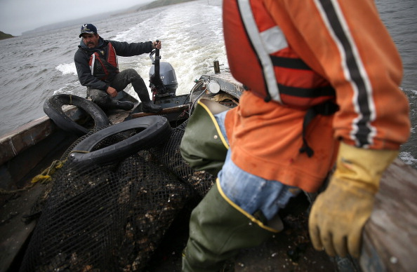 Wilderness Area「Oyster Farmers Begin To Wind Down Operations After Feds End Nat'l Seashore Lease」:写真・画像(15)[壁紙.com]
