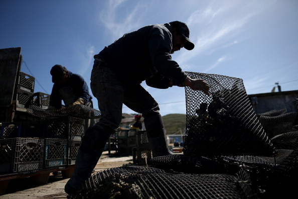 Wilderness Area「Bay Area Oyster Farm Takes Appeals Of Federal Waters Use Case To Supreme Court」:写真・画像(8)[壁紙.com]