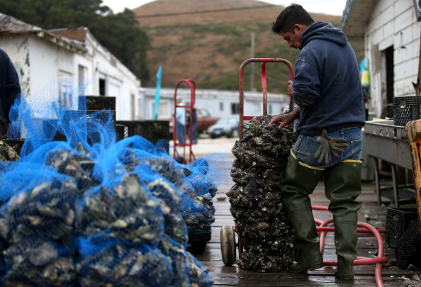 Wilderness Area「Drakes Bay Oyster Company Marks Closing After Feds Deny Use Of Federal Lands」:写真・画像(5)[壁紙.com]