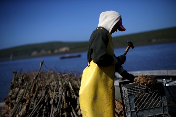 Wilderness Area「Bay Area Oyster Farm Takes Appeals Of Federal Waters Use Case To Supreme Court」:写真・画像(0)[壁紙.com]
