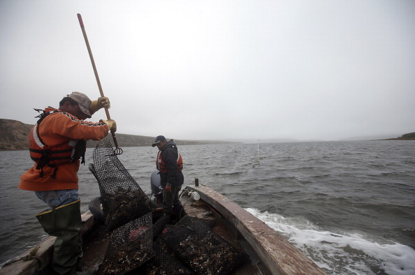 Wilderness Area「Oyster Farmers Begin To Wind Down Operations After Feds End Nat'l Seashore Lease」:写真・画像(17)[壁紙.com]