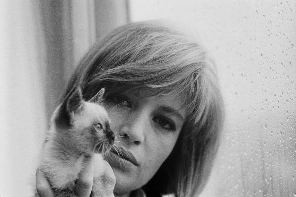 子猫「Monica Vitti」:写真・画像(1)[壁紙.com]