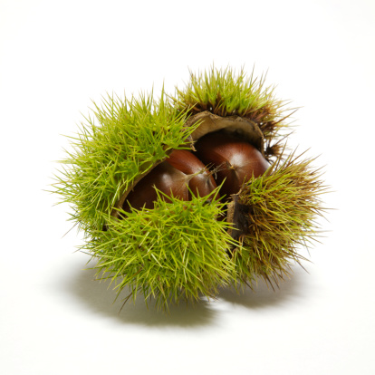 chestnut「Sweet chestnut」:スマホ壁紙(4)