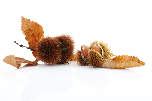 栗「Sweet chestnuts and leaves on white background, close-up」:スマホ壁紙(18)