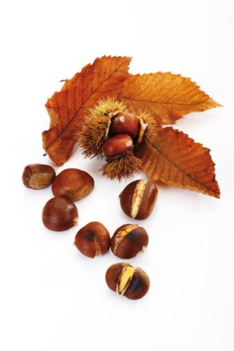 栗「Sweet chestnuts and leaves on white background, close-up」:スマホ壁紙(1)