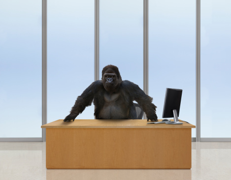 Gorilla「Gorilla CEO」:スマホ壁紙(2)
